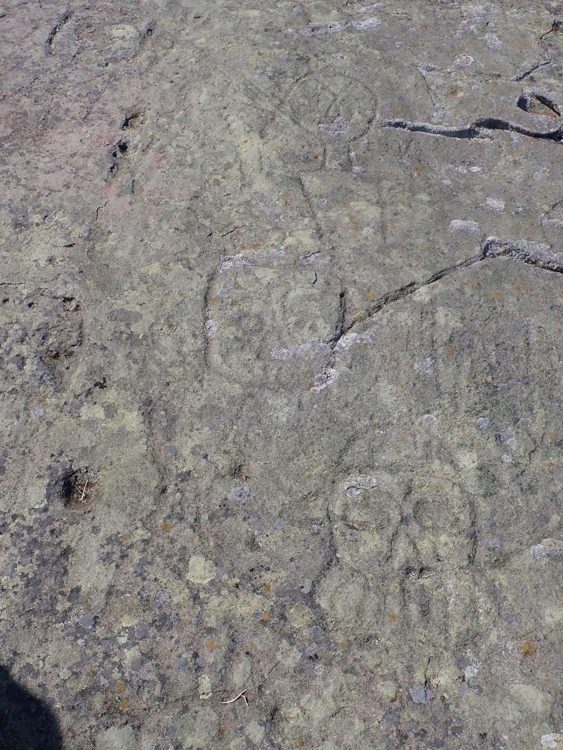 Chrome Island Petroglyphs